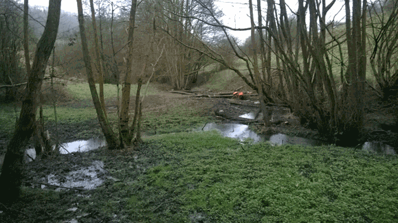 Large Woody Debris dams built using Alder coppice at Snows Farm, Dillay Brook in the Slad Valley (after heavy rain)