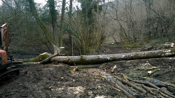 Large scale woody debris to create flood plain attenuation (Dillay Brook, Upstream of Snows Farm nature reserve)