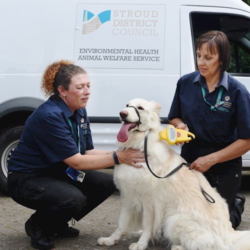 Stroud District Council Animal Welfare Service strikes gold and platinum in RSPCA awards image